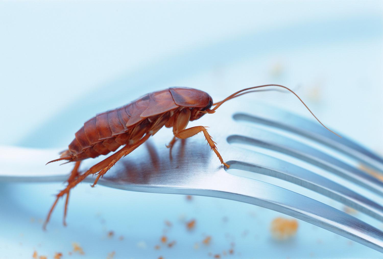كيفية القضاء على الصراصير بطريقة طبيعية