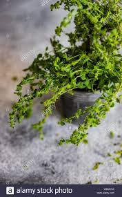 علاج سرعة القذف بالأعشاب الطبيعية