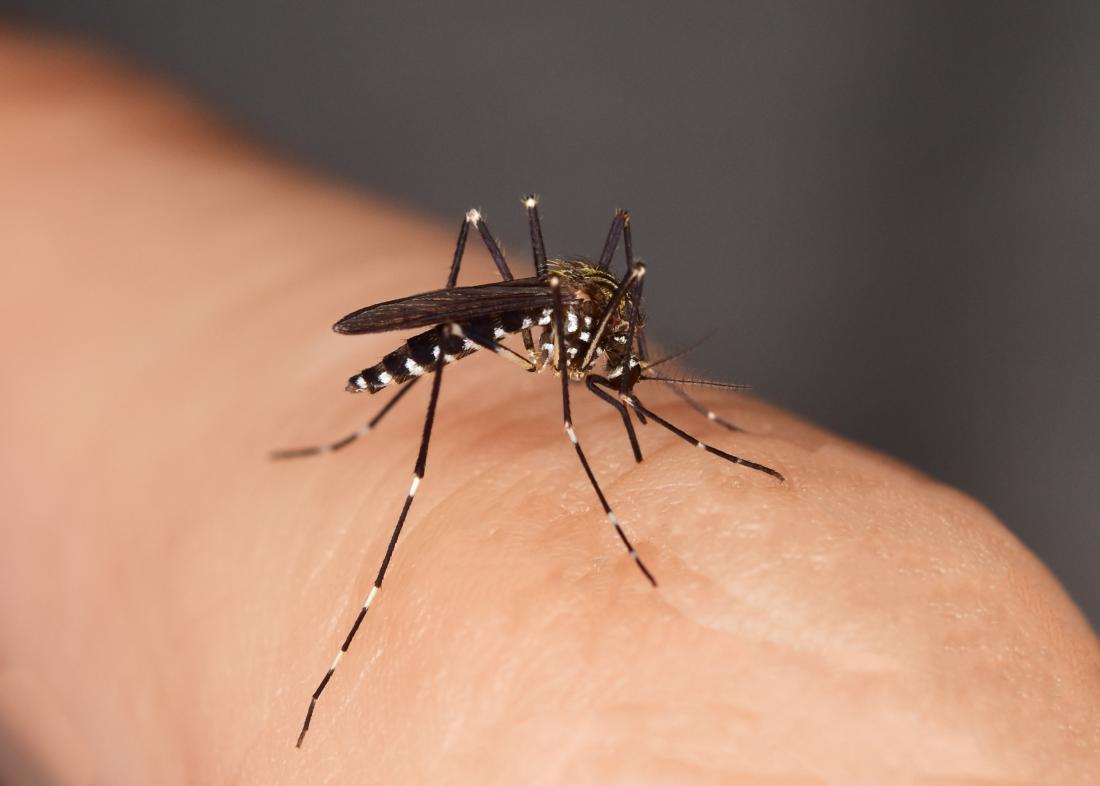 اضرار حشرة البق   وكيفة علاج قرصة البق نهائيا